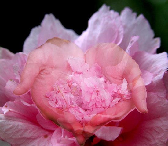 Bienvenidos al nuevo foro de apoyo a Noe #288 / 22.09.15 ~ 28.09.15 - Página 5 Flower1