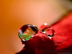Close_up_waterdrop_on_flower_cb_38_hannah