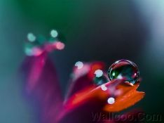 Close_up_waterdrop_on_flower_cb_wp10