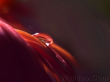 Close_up_waterdrop_on_flower_cb_wp4
