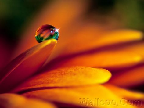 Close_up_waterdrop_on_flower_cb_wp8