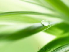 Close_up_waterdrop_on_leaf_soft