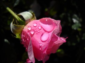 water_drop_9_by_kimmiesparrow-d31exxw
