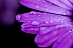 waterdrops26