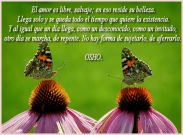 Imagen11