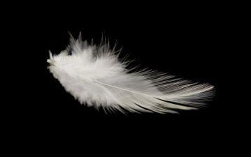 birds-feathers.s600x600
