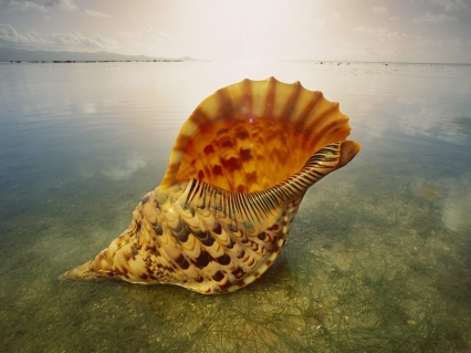 caracola-de-mar
