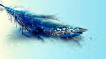 Feather-Of-Love