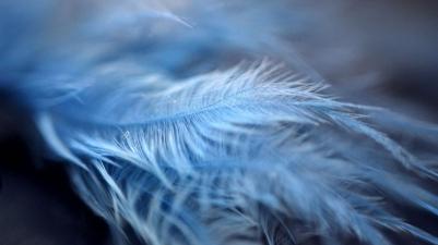 Feathers_by_AutumnWindFoxy