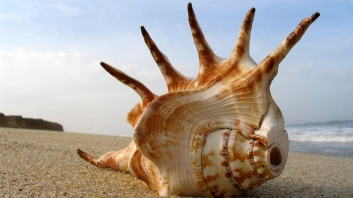 nature_spiked_shell_wds_1920x1200