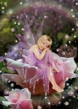 sample fairy shot web