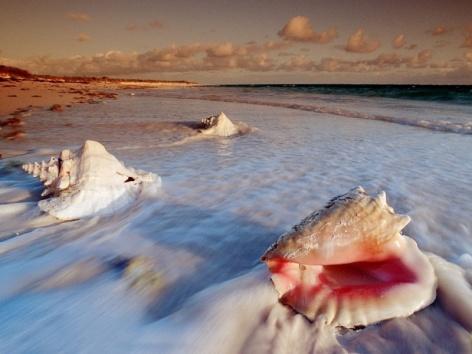 seashells1024x7682