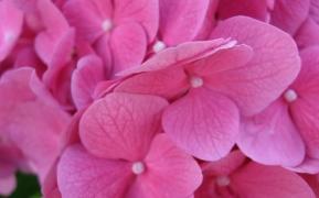 4-pink-wallpaper