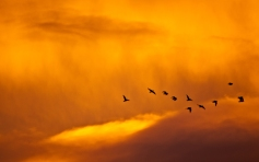 01680_sunsetandbirds_1280x800