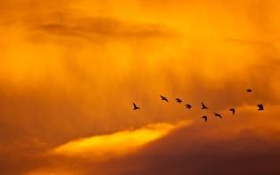01680_sunsetandbirds_1280x800