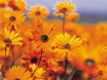 400_1194400591_garden
