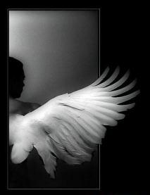 ala_de_angel