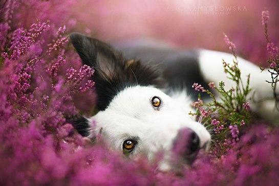 Dogs_by_Alicja_Zmyslowka_04