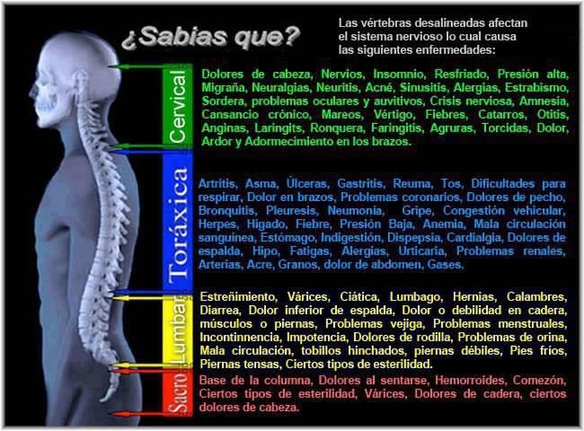 vertebras